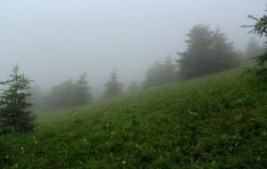【海坨山图片】#消夏计划#雨中蹬海坨,观云海,赏日出。