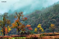 老椰脚步  家乡的秋天无限美