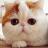 加菲猫圆圆的脸
