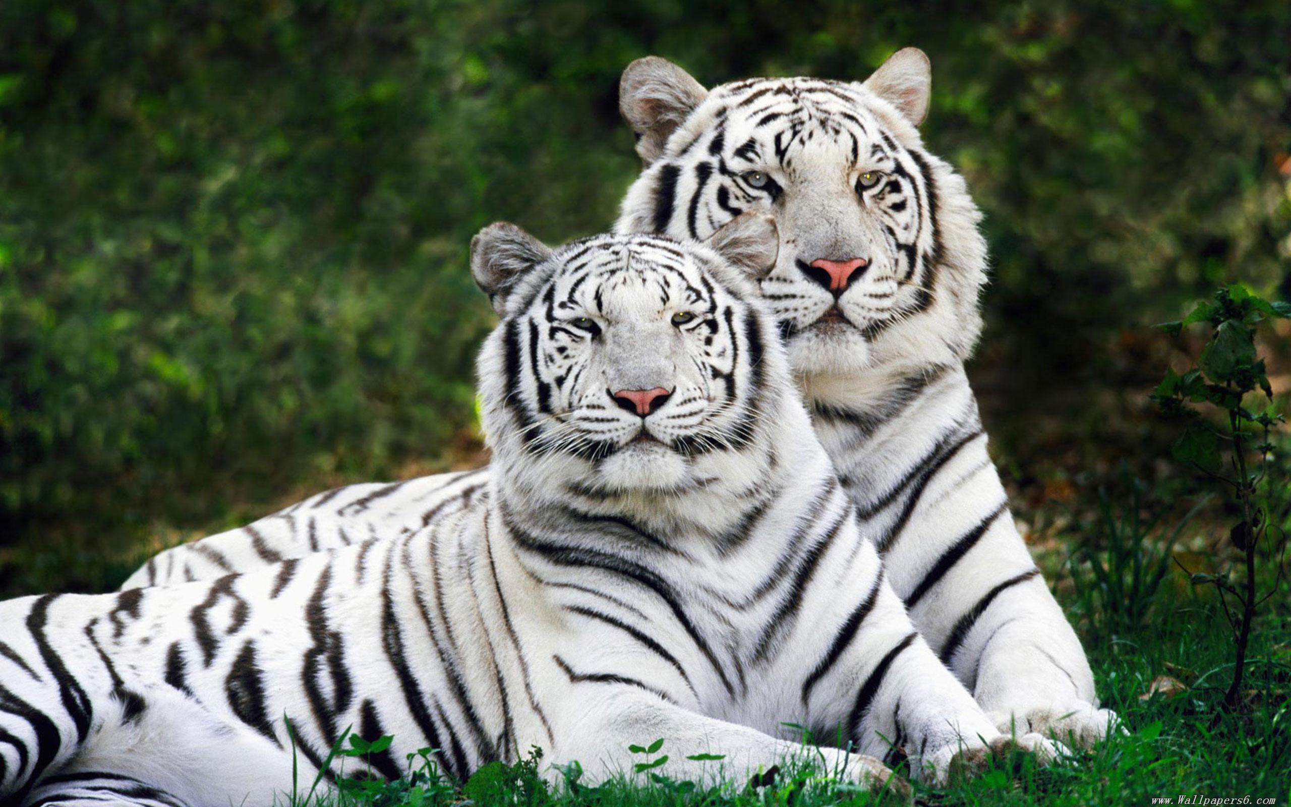 北京八达岭野生动物世界是中国较大的野生动物繁育基地之一,现已繁殖