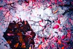 雨、神和重生の旅——广岛秋日物语