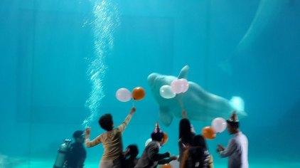 深圳小梅沙海洋世界门票