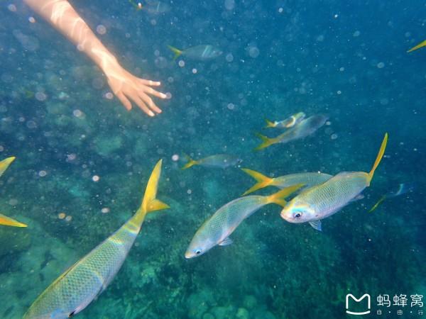 自驾行,我和朋友租了个车肠子都悔青了,还不如把钱花在体验潜水,帕劳的海景真是一天都不想浪费掉用来做别的事情)。还有水性好的可以请水下跟拍拍一组美美的水下照片。为什么说要水性好的,因为你要会点自由潜水就可以在海里各种翻跟斗拍出各种美照(这次以后我下定决心要回来苦练潜水技能,为了下次能拍出美美的水底照片)。水性不那么好的建议叫潜导有空给你多拍点浮潜照好了(我的在水下的照片就都是出自潜导之手,都还不错!) 好了,可以想到的暂时这么多了。 最后想说,不会游泳的人也可以在海上浮潜,但是会游泳的更好。很庆幸为此我特地