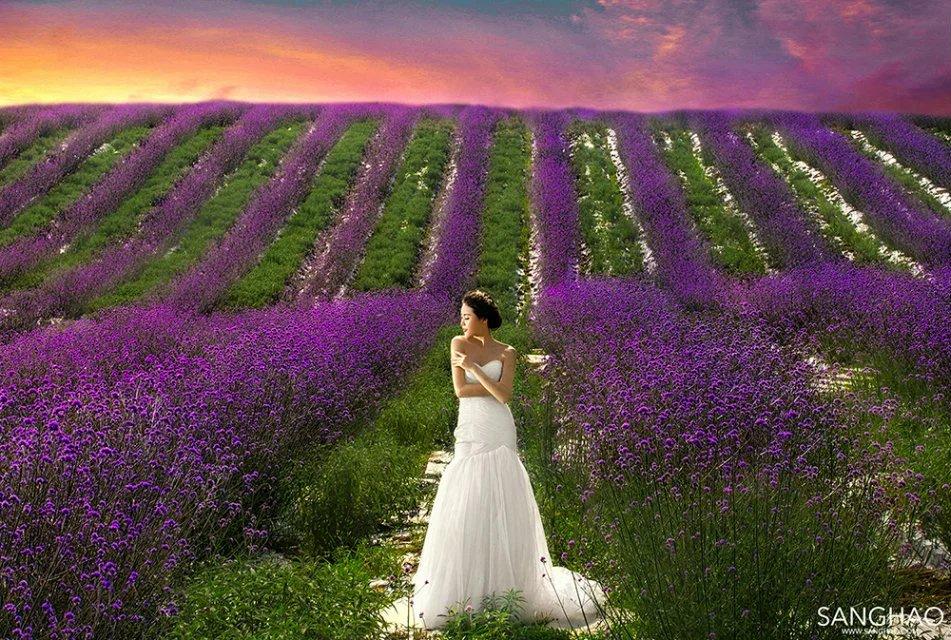 而你,依旧有一个紫色的向往,心生浪漫的情愫,不必沮丧,成都双流太平镇