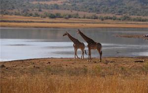 【约翰内斯堡图片】说走就走的南非之行