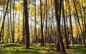 【宝兴图片】立冬,彩林・白云缠绕蓝天——硗碛藏寨&神木垒两日游