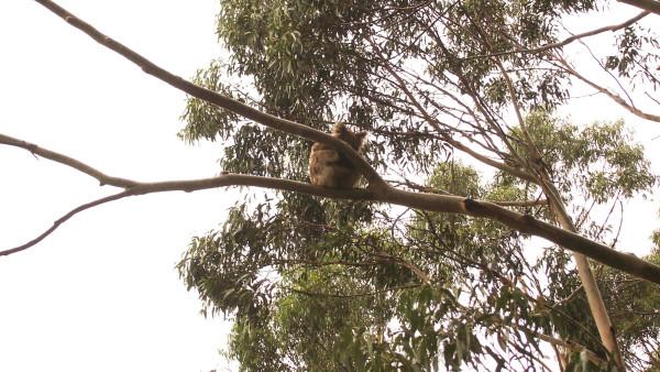 """奥特韦海角灯塔是澳洲内陆最古老的灯塔,也被称为""""白雪公主"""",门票为19"""