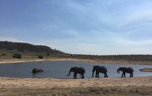 【好望角自然保护区图片】我的蜜月游——南非