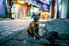 台北——猫、地图、最后的月亮和其他的一切