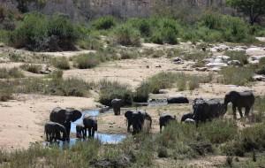 【克鲁格国家公园图片】【南非印记】Sabi Sands私人保护区+克鲁格国家公园+SINGITA酒店野奢体验