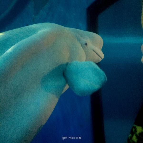 壁纸 动物 海底 海底世界 海洋馆 水族馆 鱼 鱼类 600_600