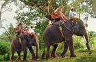 泰国普吉岛 SAFARI沙发里丛林之旅骑大象 含接送