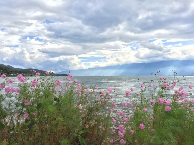 雲南,開滿鮮花的舒閒之地 17