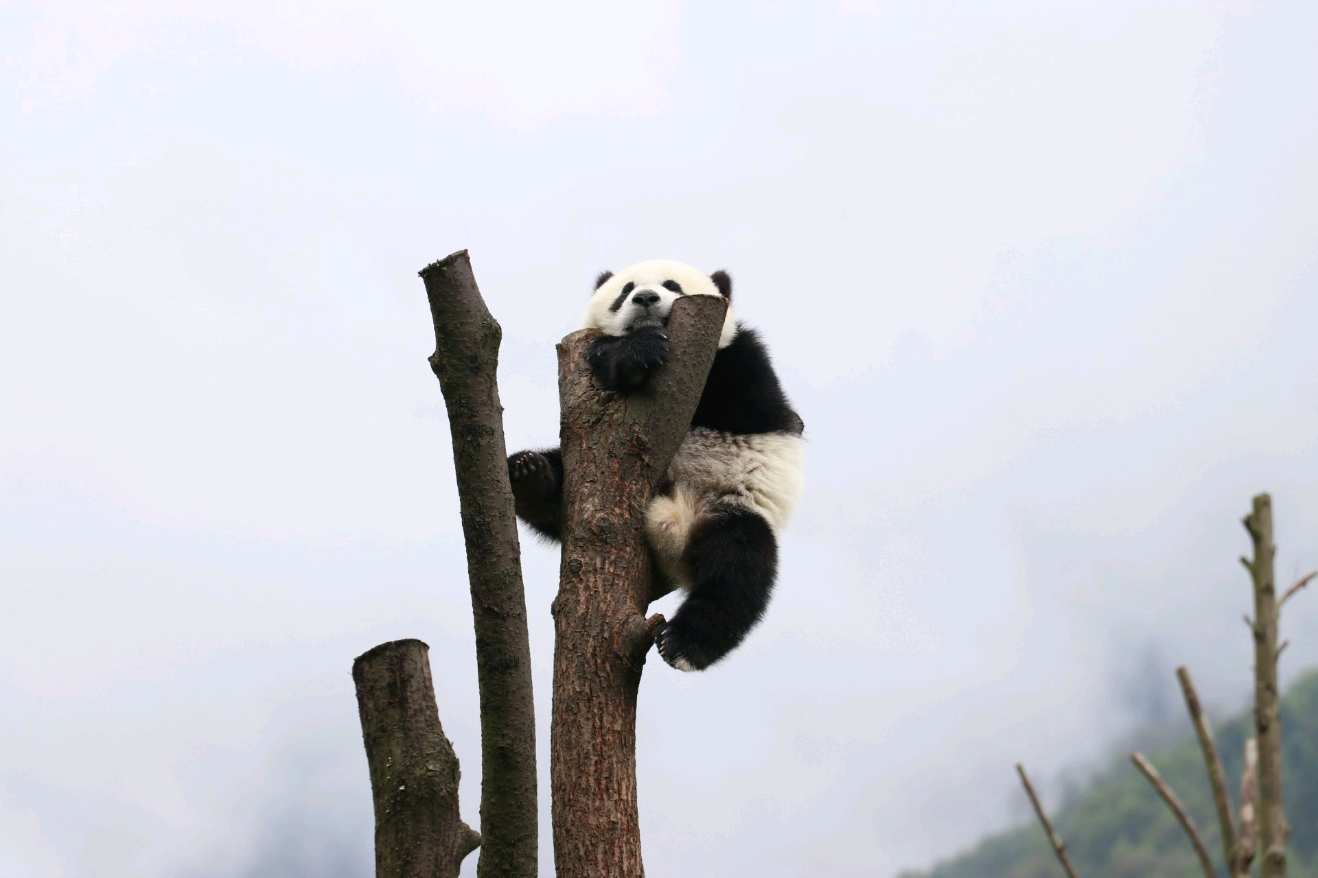 Wolong panda center